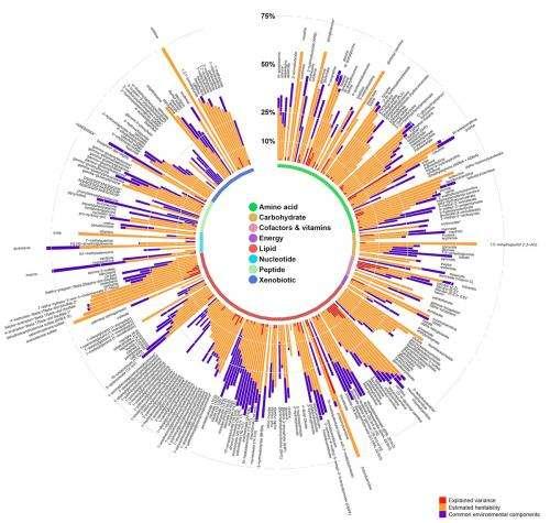 Metabolic map of human body created
