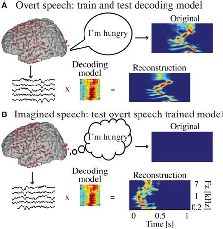 Method to reconstruct overt and covert speech