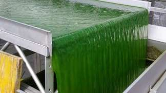 Microalgae-derived biogas a  promising alternative to fossil fuels