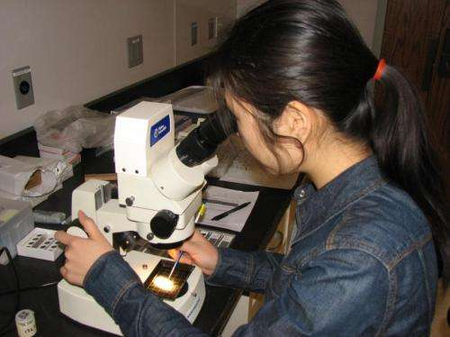 Microfossils reveal warm oceans had less oxygen, Syracuse geologists say