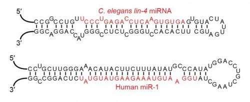 microRNA