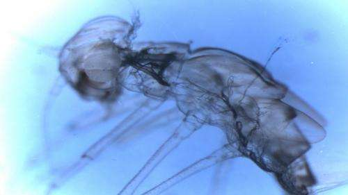 Molting Tougher on the Mayfly Than Previously Thought