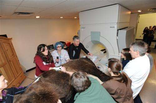 Montana sanctuary bear that underwent MRI dies