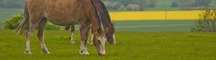 Moving horses from pasture to stabling can put them at risk of colic