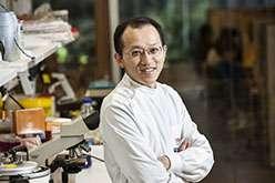 Mushroom compound with vitamin E suppresses prostate cancer tumours