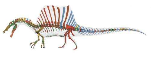 Shark-munching Spinosaurus was first-known water dinosaur