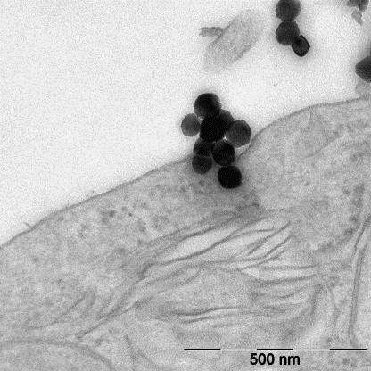 Nanosafety research: The quest for the gold standard