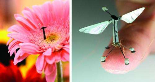 Nature inspires drones of the future