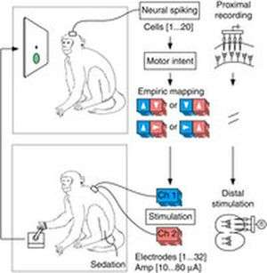 Monkey think, monkey do: experiment could lead to paralysis cure