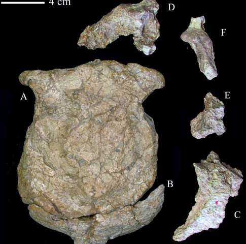 New Age of the Lantian Homo Erectus Cranium Extending to About 1.63 Million Years Ago