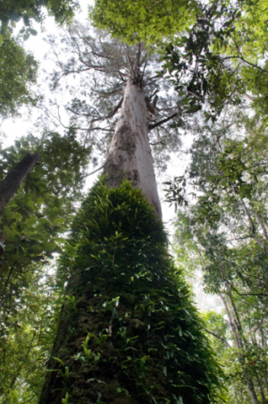 New analysis links tree height to climate
