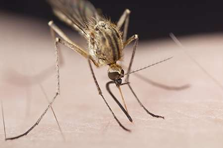 New certainty that malaria will 'head for the hills'