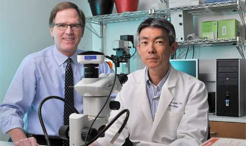 New driver of atherosclerosis offers potential as therapeutic target
