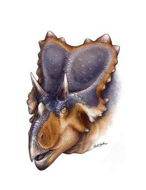 New horned dinosaur reveals unique wing-shaped headgear