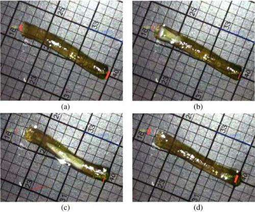 New method of wormlike motion lets gels wiggle through water