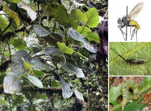 New plant species a microcosm of biodiversity