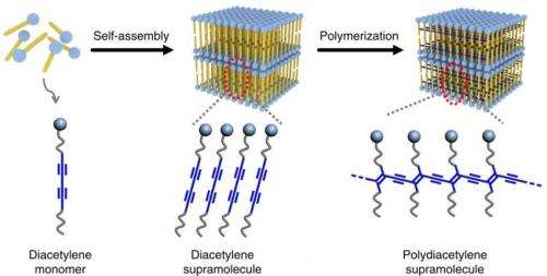 New polymer can be used to map sweat droplets in fingertips for identification purposes