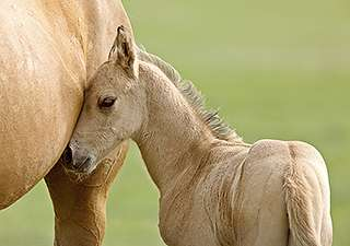 New pregnancy hormone identified in horses