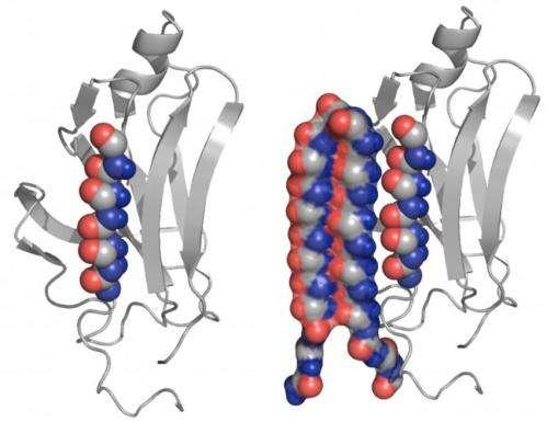 New protein structure could help treat Alzheimer's, related diseases