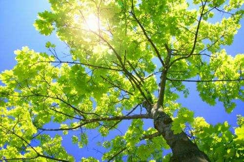 New study investigates 'sunshine' and the immune system
