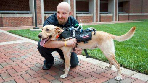 New tech aims to improve communication between dogs and humans
