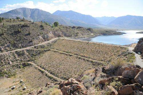 New tool identifies high-priority dams for fish survival