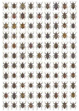 Ninety-eight new beetle species discovered in Indonesia