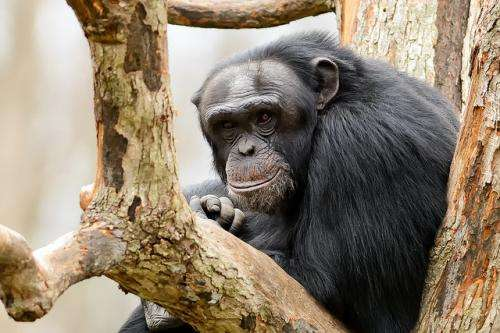 No monkeying around—animals can and will have human rights