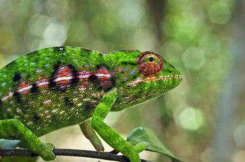 No single explanation for biodiversity in Madagascar