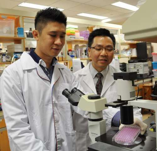 NUS study shows effectiveness of artesunate, a common herbal-based anti-malarial drug, in controlling asthma
