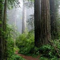 Nutrient-rich forests absorb more carbon