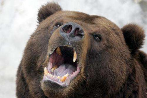 One of the handful of brown bears in the Italian alps has died after being tranquilised