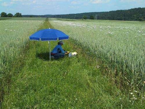 Organic agriculture boosts biodiversity on farmlands
