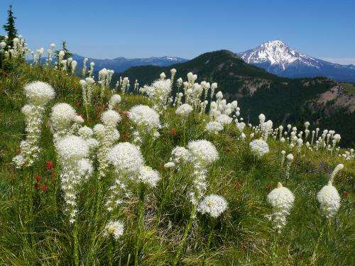 App brings wildflower identification to your fingertips