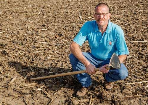 Palmer amaranth threatens Midwest farm economy, researchers report