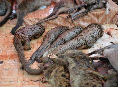 Pangolins and other animals are displayed for sale at the Owendo market in Libreville on August 8, 2014