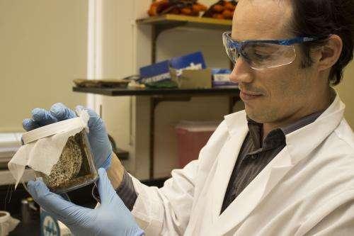 Penn Medicine epidemiologists find bed bug hotspots in Philadelphia, identify seasonal trends