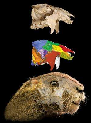 Phenomenal fossil and detailed analysis reveal details about enigmatic fossil mammals