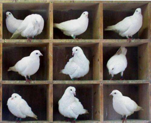 Physicists discuss quantum pigeonhole principle