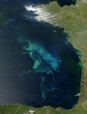 Phytoplankton and zooplankton biomass will decrease 6 and 11 percent due to climate change