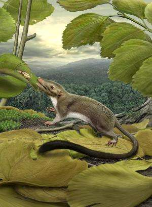 Research team claims fossil-only study of placental mammalian evolution time frame is wrong