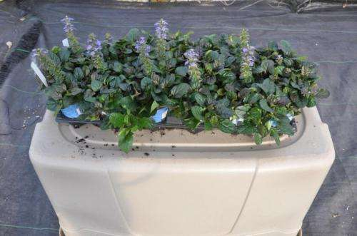 Plantable containers show promise for use in groundcover production, landscaping