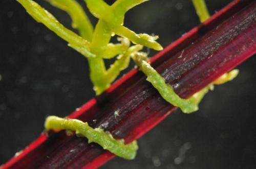 Plants may use newly discovered language to communicate, Virginia Tech scientist discovers