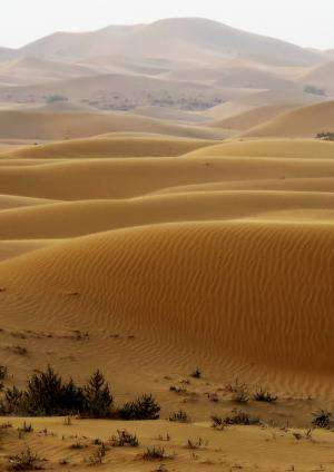 Researchers bulldoze desert to learn how sand dunes form