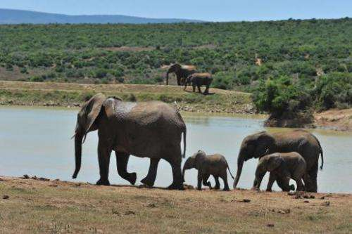 Poaching has risen sharply across Africa in recent years fuelled by rising demand in Asia for ivory and rhino horn, coveted as a