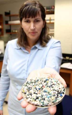 Polyethylene and polypropylene beads threaten shoreline ecosystems