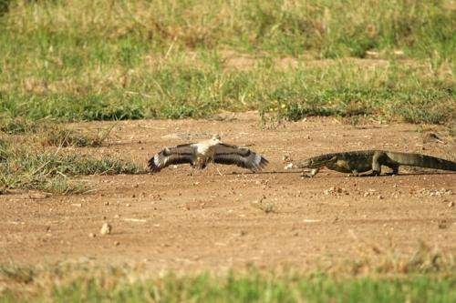 Predators predict longevity of birds