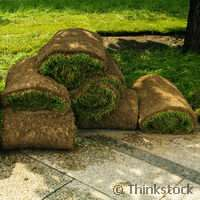 Project tackles growing pains of Europe´s grass producers