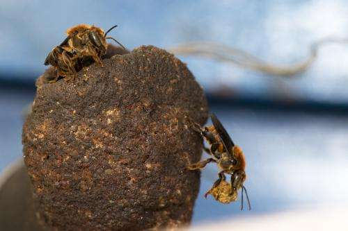 Protecting Africa's bees for world food security