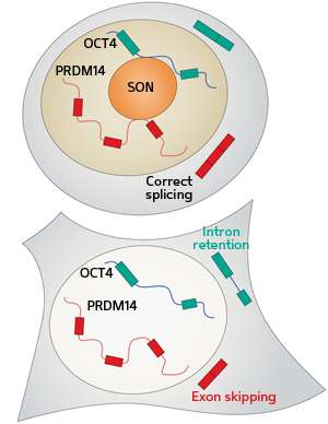 Regulating stem cell behavior